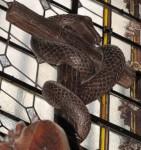 carême3 serpent.jpg
