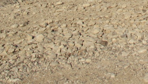 Terre Sainte (224)-Désert de judée2.jpg
